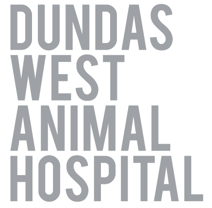 Toronto, ON Veterinarian Animal Clinic | Dundas West Animal Hospital