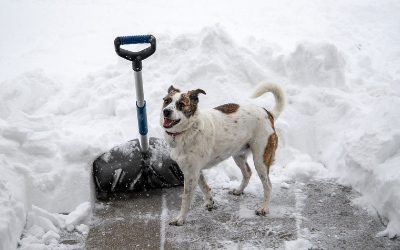 image for Keeping Your Pets Warm and Safe from Winter Worries
